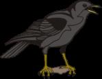 Bird Crow