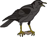 Bird Crow motif