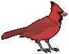 motif bird Cardinal red