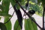 bird chickadee 4