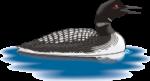 motif bird Loon