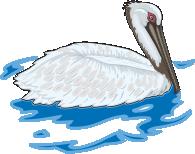 motif bird pelican swim