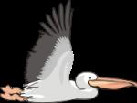 motif bird Pelican