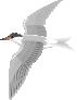 motif bird tern sm