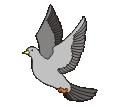 motif bird Dove