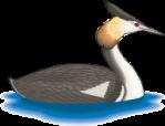 motif bird Grebe
