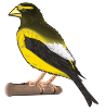 motif bird grosbeak
