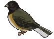 motif bird junco