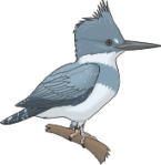motif bird Kingfisher