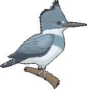 motif bird Kingfisher