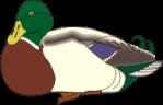 motif bird Mallard