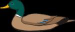 motif bird mallard2