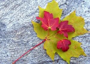 magick michaelmas dragon 2 leaf