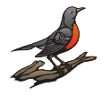 motif bird robin