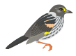 motif bird sparrow dusky