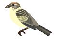 motif bird sparrow