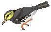 motif bird warbler