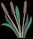 motif plant herb Cattail