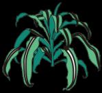 motif plant houseplant dracaena