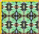 Frog Large Repeat
