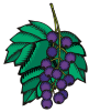 motif plant fruit Grape muin celtic tree month
