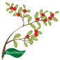 motif plant herb Bearberry