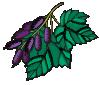 plant motif berry
