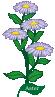 plant motif flower Aster