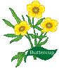plant motif flower buttercup