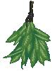 plant hanging herb