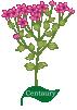 Plant motif Herb Centaury