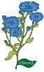 Plant Herb Chicory