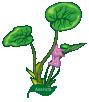 motif plant Herb Wild Ginger