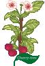 Plant Tree Cherry