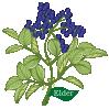plant motif Elderberry Ruis
