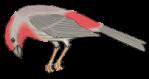 motif bird finch