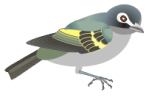 motif bird vireo