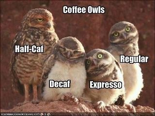 cartoon funny owls coffee