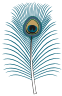 Motif bird peacock feather