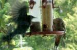 feeder 02-19-13