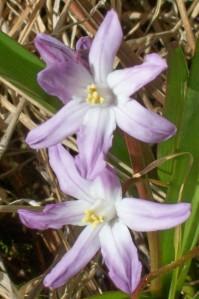 bulb flower 030913