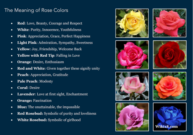 magick rose magic