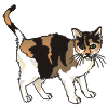 motif animal cat calico