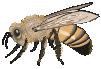 motif insect honeybee