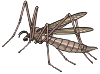 motif insect mosquito