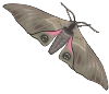 motif insect moth grey pink