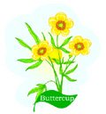 buttercup2color