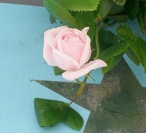 sign rose 052613