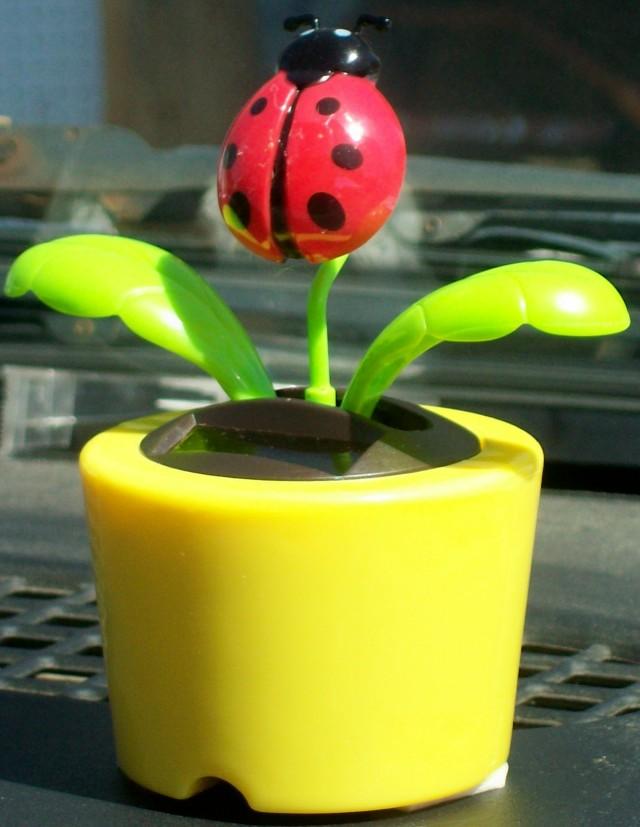 ladybug wiggle 062813