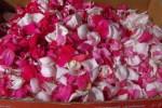rose petal 061413
